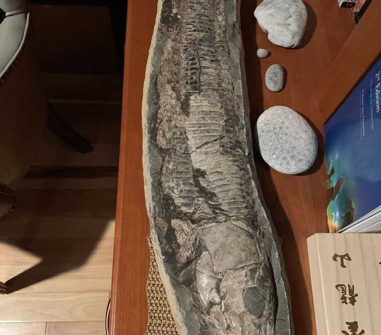 Fossil fish from Cretaceous of Brazil maybe Vinctifer