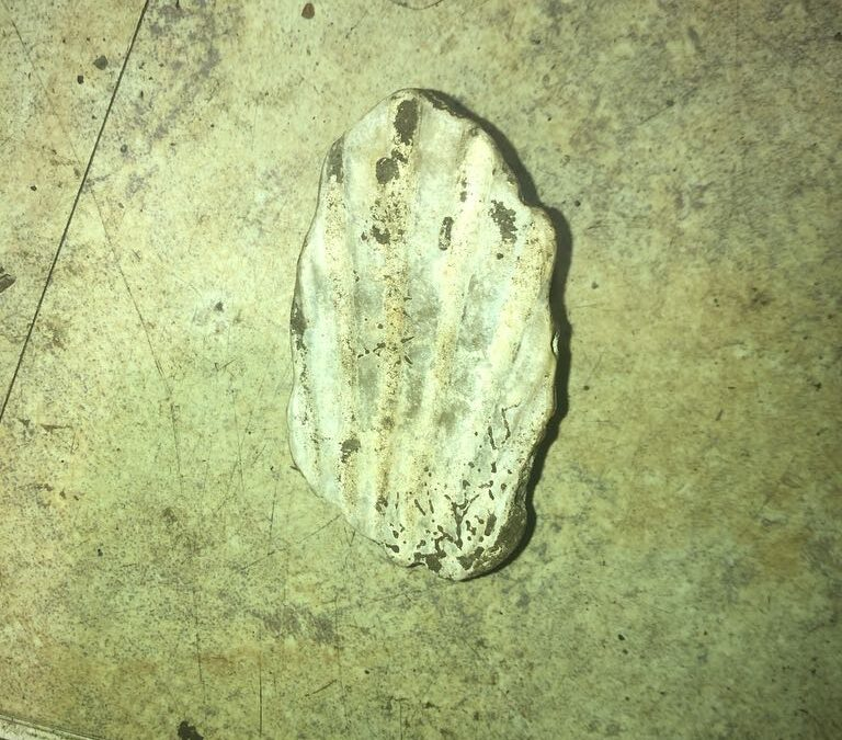 Maybe oyster shell