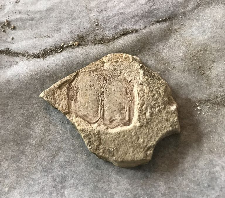 Not sure, maybe fossil plant
