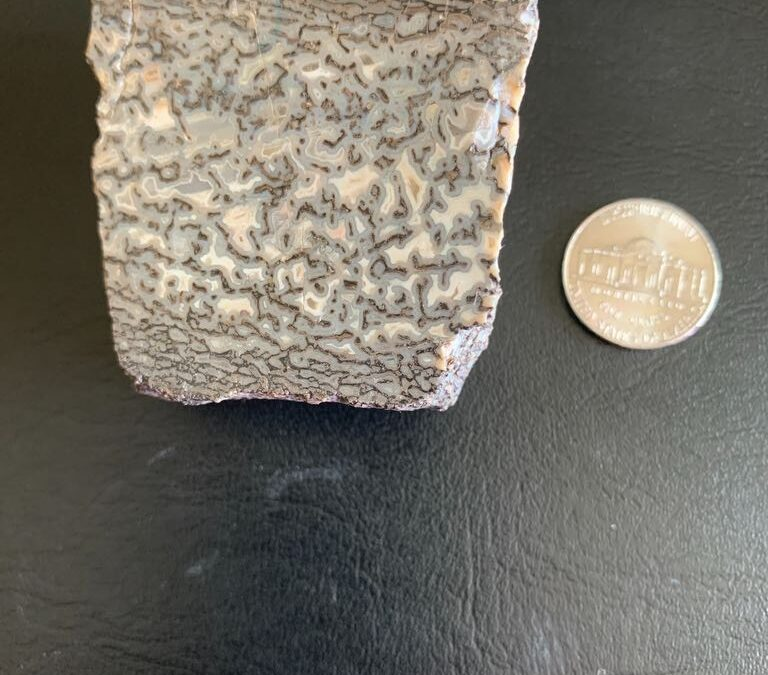 Probably not a fossil