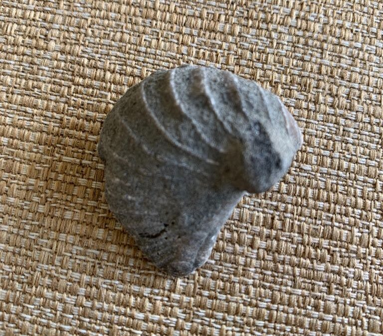 Definitely a fossil but could be a few different things
