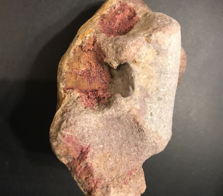Not a fossil