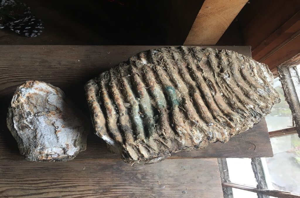 Maybe mammoth tooth