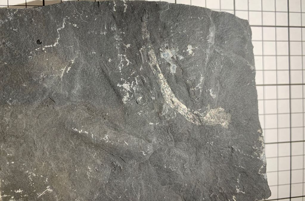 Maybe trace fossil or nothing